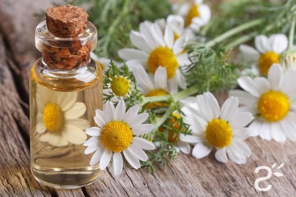 huile essentielle gaulthérie